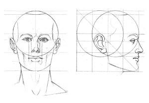 Proporciones del rostro