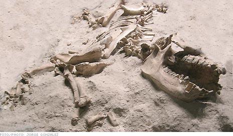 fosiles2