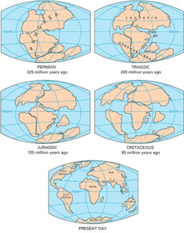 """La era Mesozoica duró aproximadamente 180 millones de años y se dividió en tres períodos: Período Triásico: (Hace 248 - 208 millones de años) Un super continente llamado Pangea, que significa """"toda la tierra"""". Período Jurásico: (Hace 208-146 millones de años) Pangea se divide en dos y se forman Laurasia y Gondwana. Período Cretáceo: (Hace 146-65 millones de años) Continúa la deriva continental a gran velocidad, al mismo tiempo que se incrementa la actividad volcánica. La forma de los continentes es casi la misma que hoy en día."""